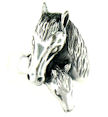 sterling silver horse ring HR658